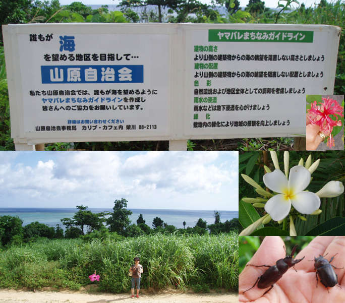 石垣島・川平の宿泊 Hills Yamabare ヤマバレガイドライン