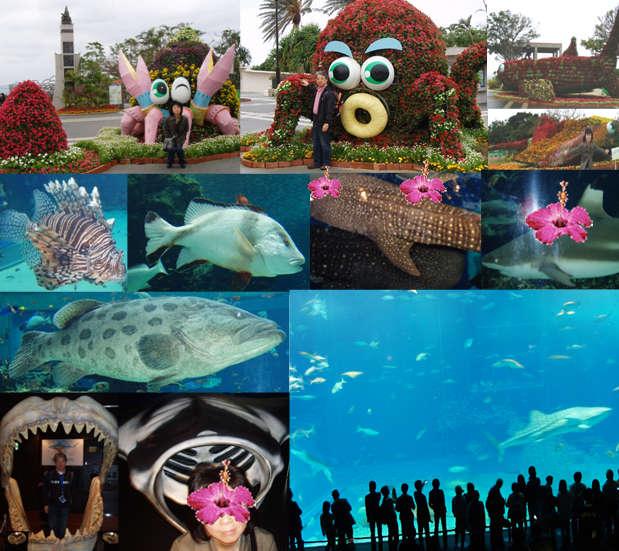 石垣島・川平の宿泊なら Hills Yamabare 美ら海水族館
