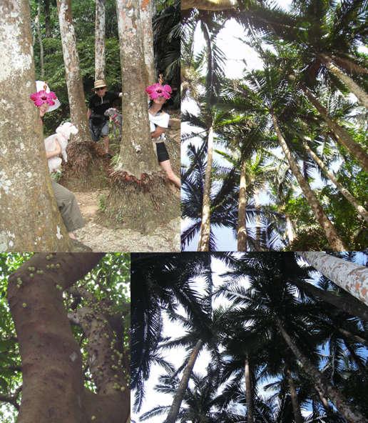 石垣島・川平の宿泊なら Hills Yamabare ヤエヤマヤシ原生林