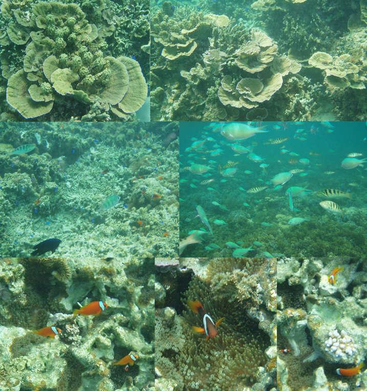 hillsyamabare 石垣島 川平 宿泊 白保 サンゴ 珊瑚