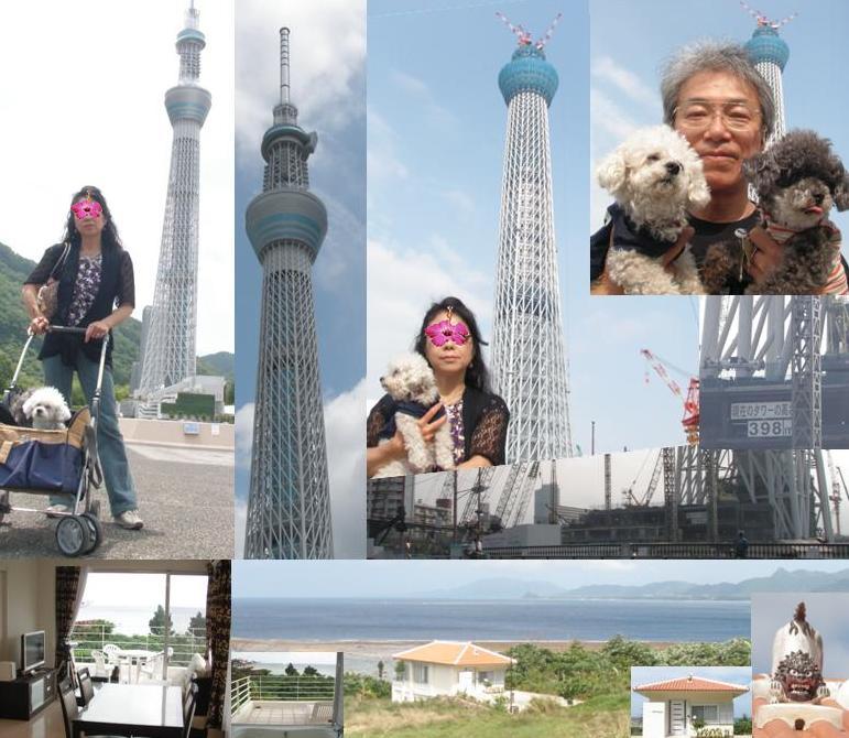 ヒルズヤマバレ スカイツリー 観光 人気 石垣島 泊まる 貸別荘