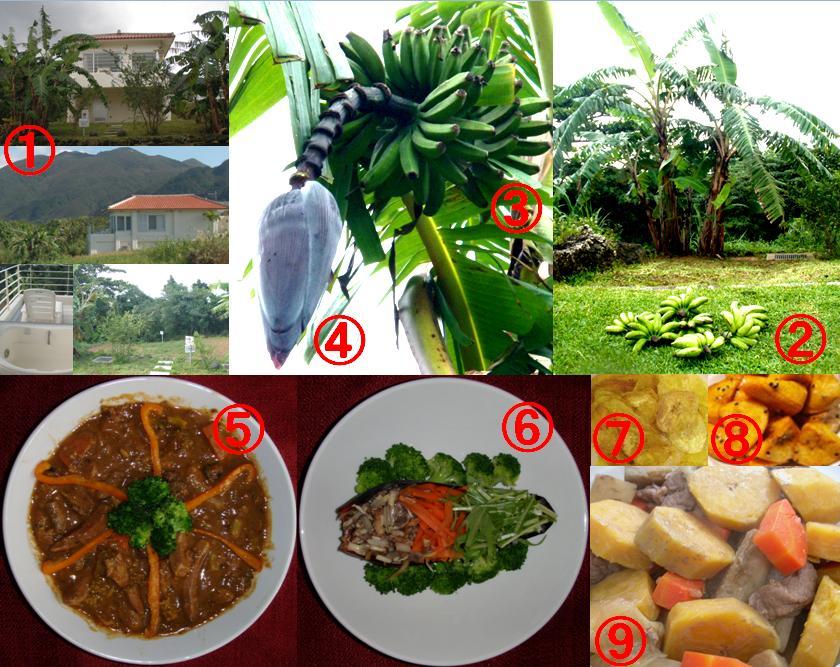 ひるずやまばれ 石垣島 泊まる 料理 島バナナ 青バナナ レシピ