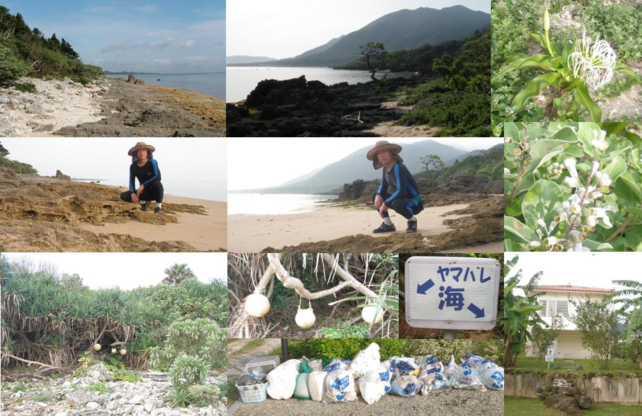ヒルズヤマバレ 海岸 清掃 ボランティア ハマユリ 発砲スチロール ペットボトル 漁具 宿泊