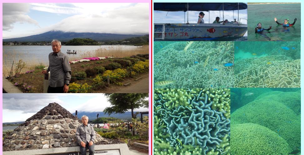 世界遺産 富士山 河口湖 花 世界遺産以上 サンゴ礁 アオサンゴ 白保 熱帯魚 ニモ シュノーケル グラスボート