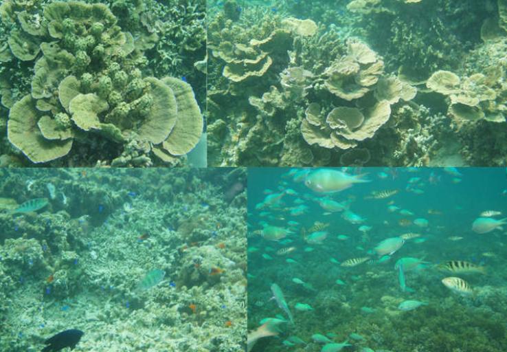 サンゴ礁 テーブルサンゴ 熱帯魚 ニモ