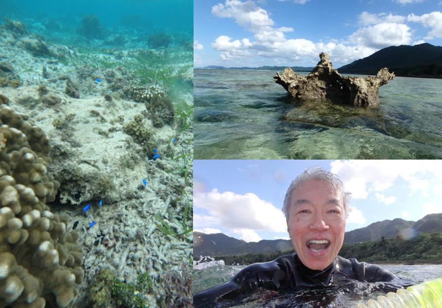 ヒルズヤマバレ 熱帯魚 東シナ海 海の中 水中カメラ