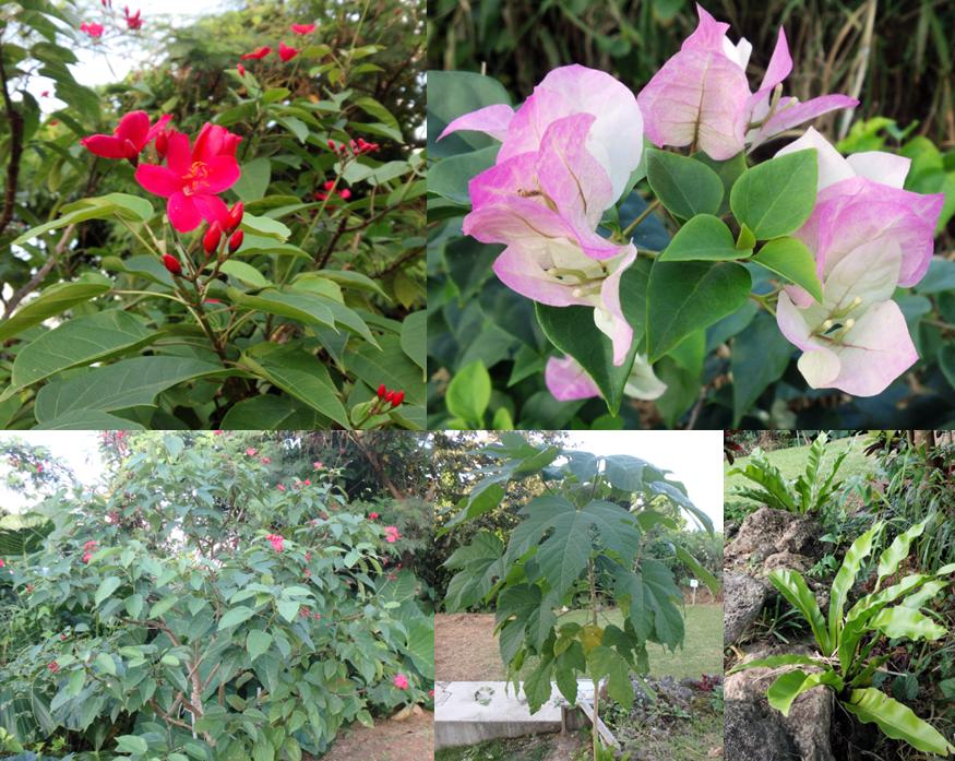 hillsyamabare 花 草 木 庭 自然