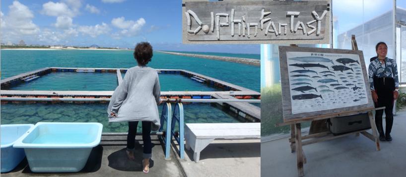 石垣島 ドルフィン ファンタジー ふれあいコース