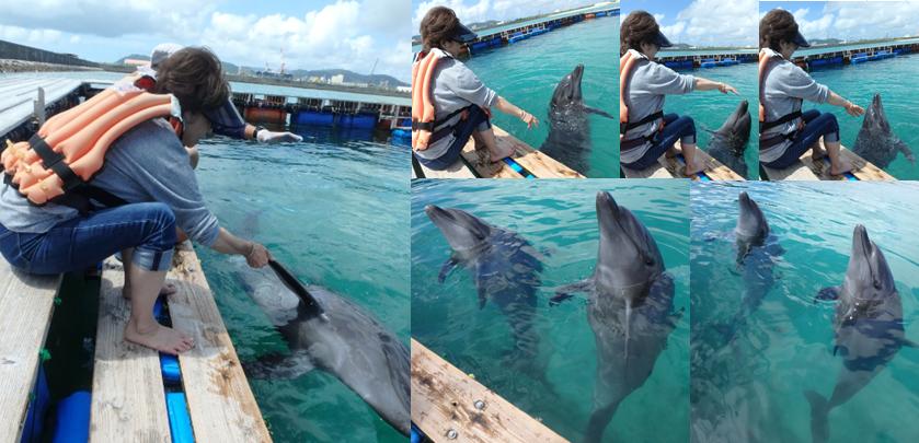 イルカ ドルフィン 握手 回転