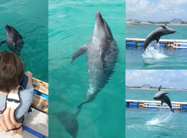 イルカ ドルフィン 背面飛び ジャンプ