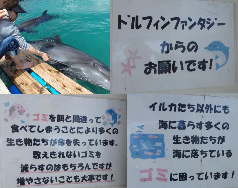 イルカ 最後にもう一度握手 お別れ ゴミ 捨てないで お願い 心が痛む