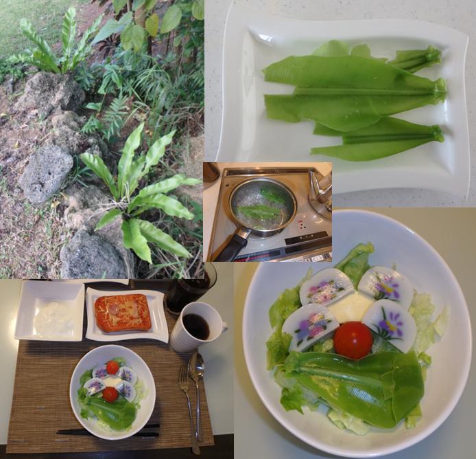 ひるずやまばれ 海眺望 サンゴ礁 東シナ海 庭 オオタニワタリ 食用 サラダ 湯がく 天ぷら 炒める