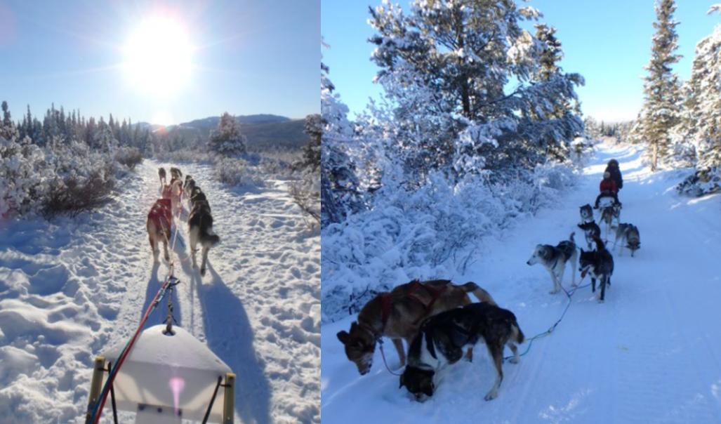 犬ぞり スノーモービル 寒じき 観光 湖
