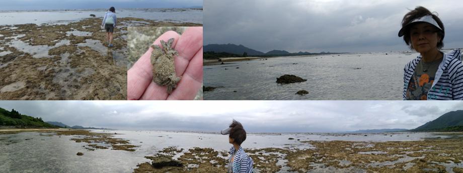 大潮 磯 干瀬 カニ 熱帯魚 東シナ海 サンゴ サンゴ礁