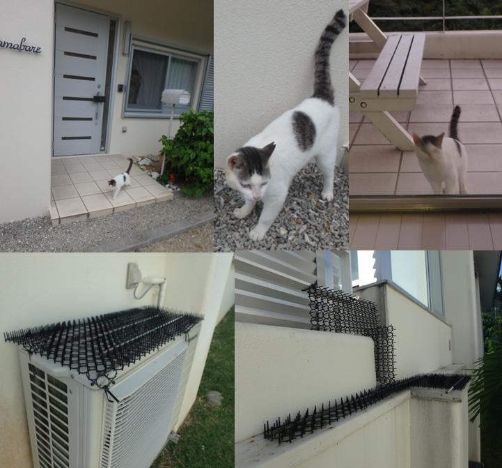ネコ にゃーちゃん テラス 玄関 かわいい ペット禁止 元飼い猫