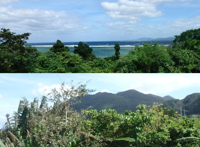 ひるずやまばれ テラス サンゴ礁 眺望 桴海茂登岳