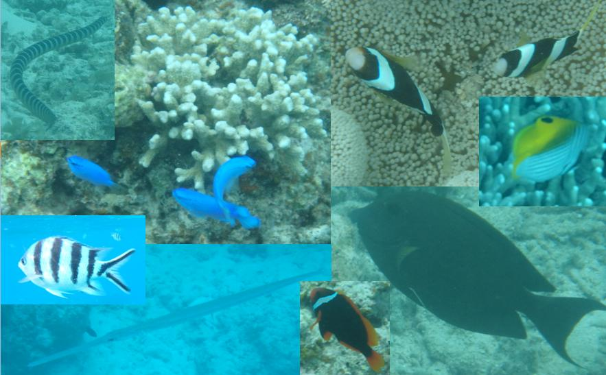 石崎 珊瑚 さかな 熱帯業 ウミヘビ