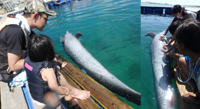 イルカ お腹 無防備