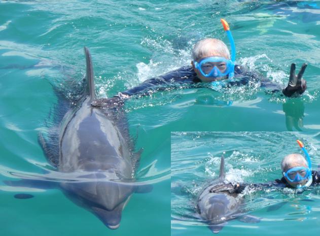 ドルフィンファンタジー イルカ 触れ合い スイム