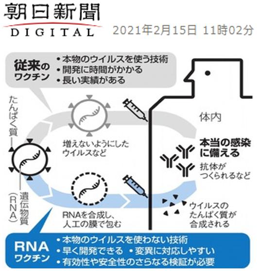 新型コロナ ワクチン RNA ファイザー